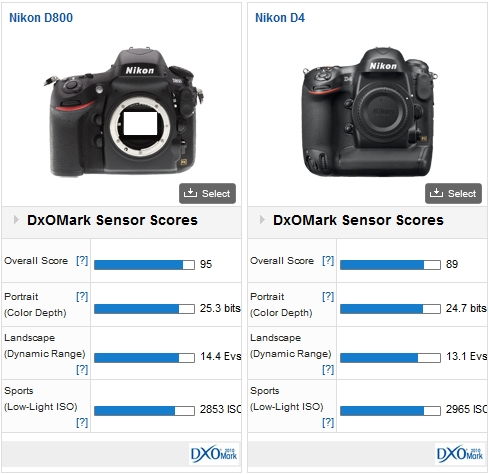 Nikon D800 vs Nikon D4